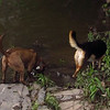 Jake, Maddue, boyfriend, towpath, 5