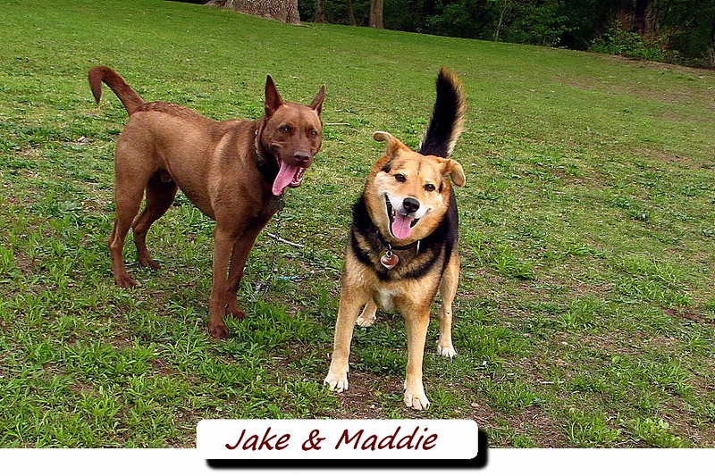 Jake, Maddie, towpath, FB2, TEXT