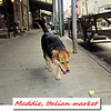 maddie, italian, market, philadelphia, walk, offleash, cover, facebook