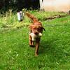 Maddie, Ryder the dog , lambertville, 9