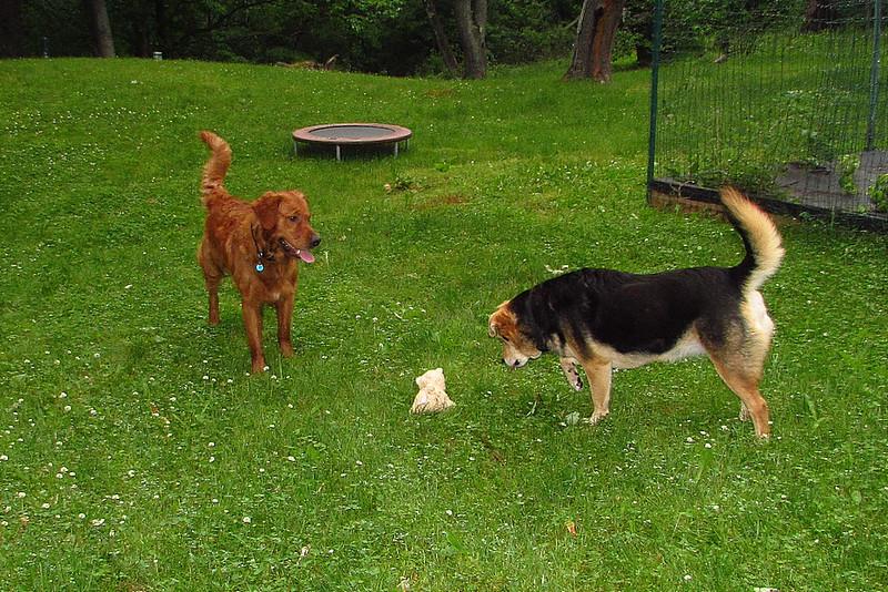 Maddie, Ryder the dog , lambertville, 7, FB