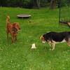 Maddie, Ryder the dog , lambertville, 7
