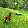 Maddie, Ryder the dog , lambertville, 8