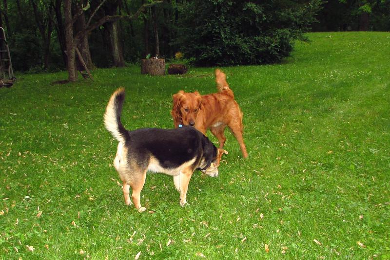 Maddie, Ryder the dog , lambertville, 2