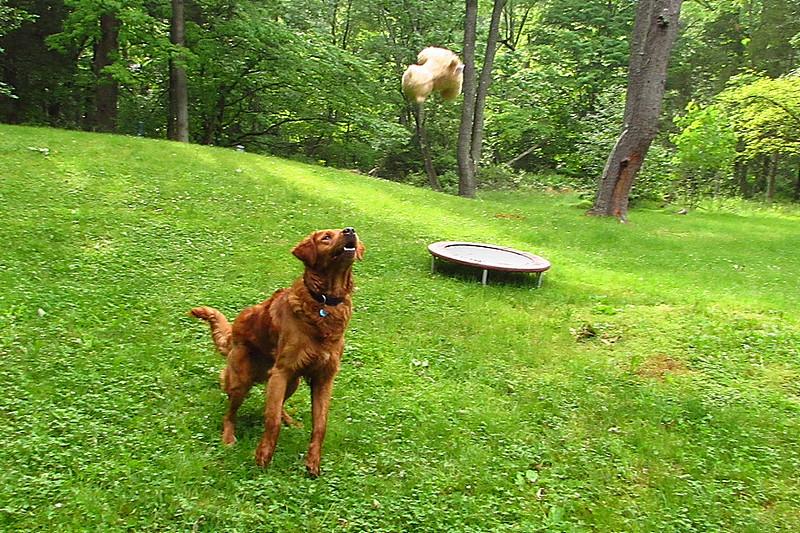 Maddie, Ryder the dog , lambertville, 8, FB