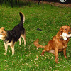 Maddie, Ryder the dog , lambertville, 5