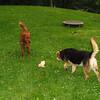 Maddie, Ryder the dog , lambertville, 6