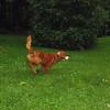 Maddie, Ryder the dog , lambertville, 3, FB
