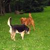 Maddie, Ryder the dog , lambertville, 2, FB