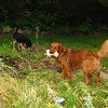 Maddie, Ryder the dog , lambertville, 4