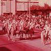 1963 (Jan) - Rose Parade - Al Malaikah Patrol - Pasadena, CA - From the Byron W. Yaden 35MM Slide Collection