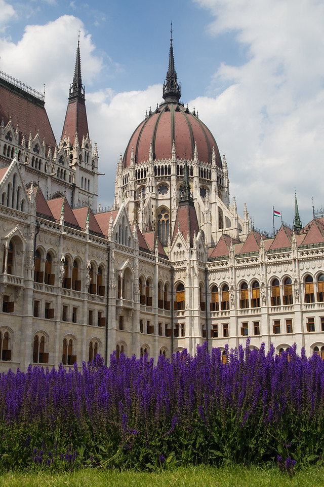 Budapest Parliament with purple flowers