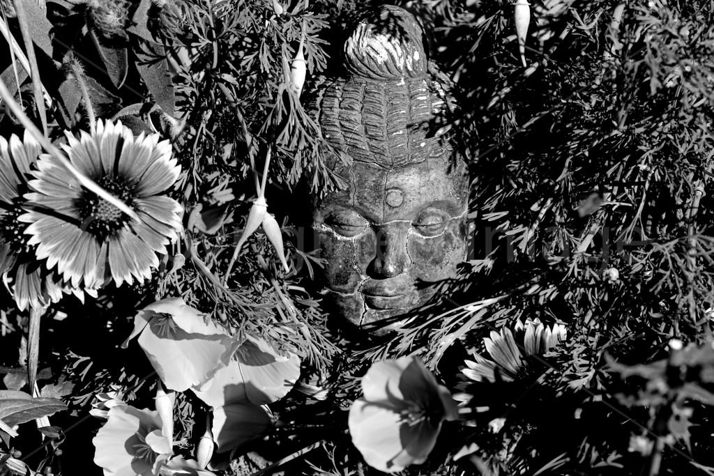 Buddha's Blossoms