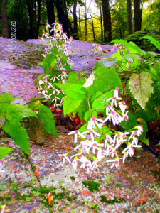 New England Flora<br /> ...and beautiful surroundings...