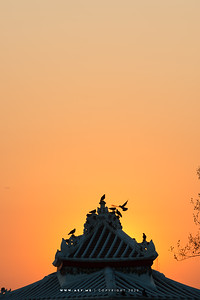 Wat Arun (The Temple of Dawn)