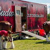 Clydesdales2015-106