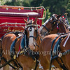 Clydesdales2015-110