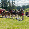 Clydesdales2015-109