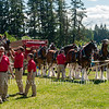 Clydesdales2015-107