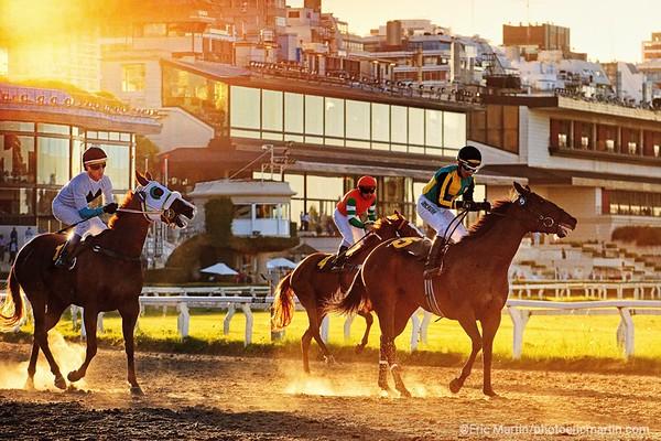 ARGENTINE. BUENOS AIRES. QUARTIER DE PALERMO. L'hippodrome (1908) construit dans un style XVIIIe français, voisine avec le Campo Argentino de Polo
