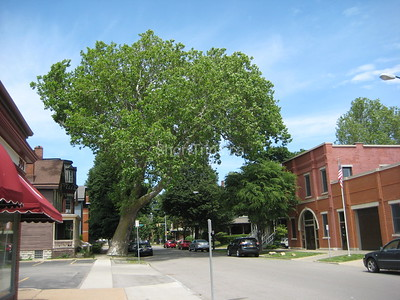 Michael Pacey - Buffalo's oldest tree IMG_6782