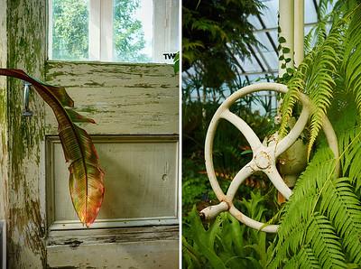 Interior view, Buffalo Botanical Gardens, Buffalo, NY. Photo by Brandon Vick, http://brandonvickphotography.com/