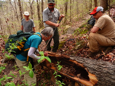Wilderness Volunteers: 2017 Buffalo National River Service Trip