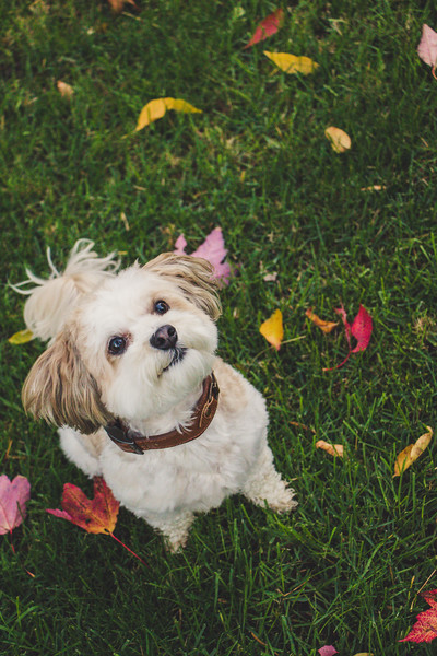 SC Photography - Pet Photography in Buffalo, NY