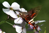 bugs and blooms 2014 - a closer look at our backyard flora and fauna. 6/7/2014