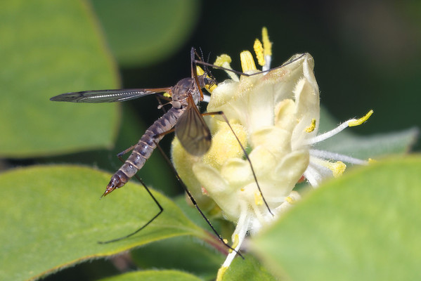 bugs and blooms 2014 - a closer look at our backyard flora and fauna. 5/19/2014