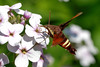 bugs and blooms 2014 - a closer look at our backyard flora and fauna. 6/8/2014