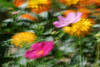 Windy days...<br /> bugs and blooms 2014 - a closer look at our backyard flora and fauna.