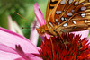 bugs and blooms 2014 - a closer look at our backyard flora and fauna.