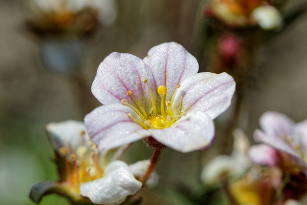 Bugs & Blooms 2016 - a closer look at our backyard flora and fauna.