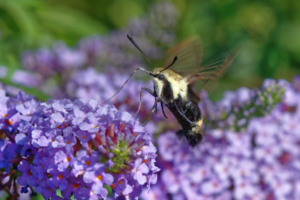 Bugs & Blooms 2016 - a closer look at our backyard flora and fauna