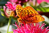 Bugs & Blooms 2017 - a closer look at our backyard flora and fauna.