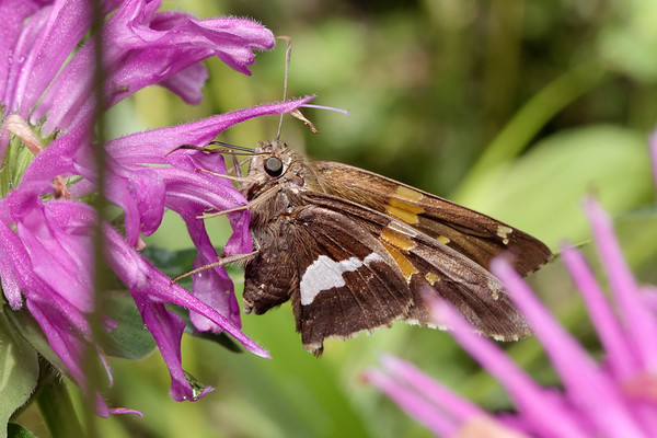 Bugs & Blooms 2018 - a closer look at our backyard flora and fauna