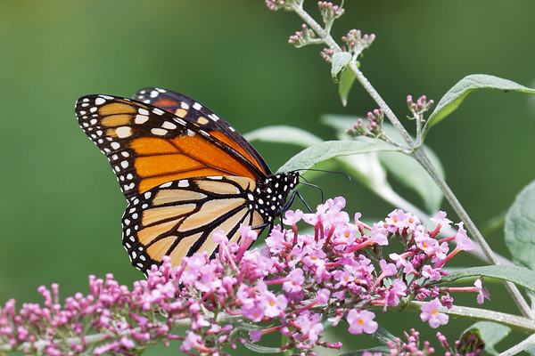 Bugs & Blooms 2018 - a closer look at our backyard flora and fauna.