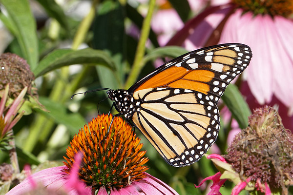 Bugs & Blooms 2019 - a closer look at our backyard flora and fauna.