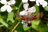 Bugs & Blooms 2020 - a closer look at our backyard flora and fauna.