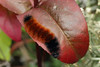 bugs and blooms 2013 - a closer look at our backyard flora & fauna.<br /> ...with apologies to Mick Jagger...
