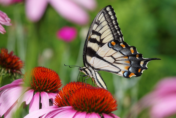 bugs and blooms 2013 - a closer look at our backyard flora & fauna.