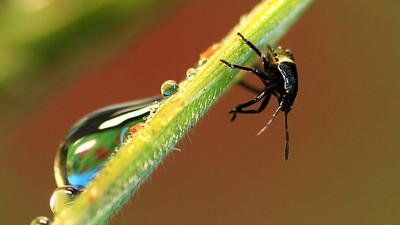 Baby Bug by Bruno SUIGNARD