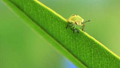 Baby Bug (4) by Bruno SUIGNARD