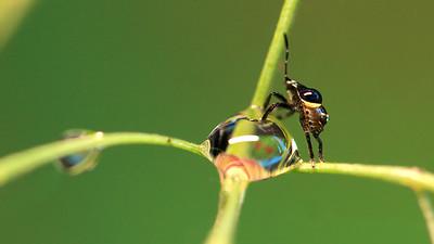 Baby Bug (2) by Bruno SUIGNARD