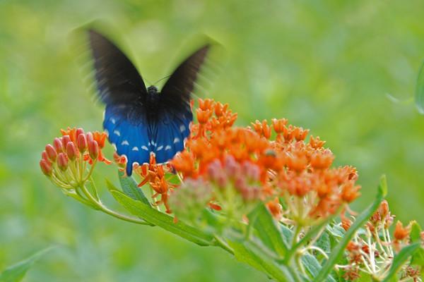 Butterfly Takeoff