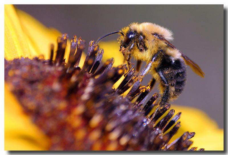 7-19-05 Bumble Bee 2