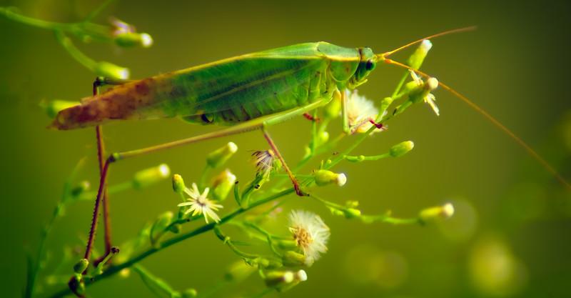 Bugs and Beetles - 154.jpg