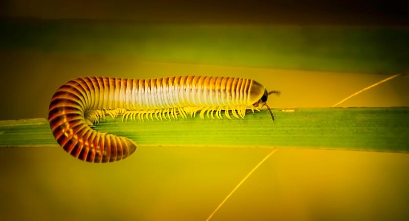 Bugs and Beetles - 160.jpg