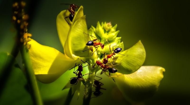 Bugs and Beetles - 68.jpg